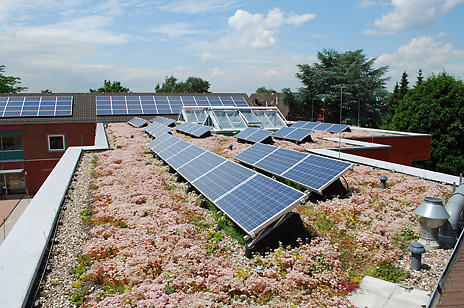Sun Root 30 Green Roof Solutions By Optigreen
